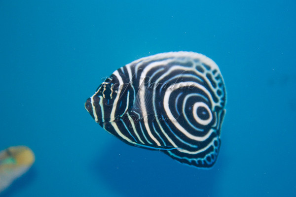 895435005 bAjPV M - New Stuff at Reef Paradise!