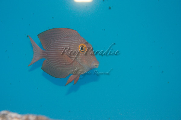 895442095 MQJ7m M - New Stuff at Reef Paradise!
