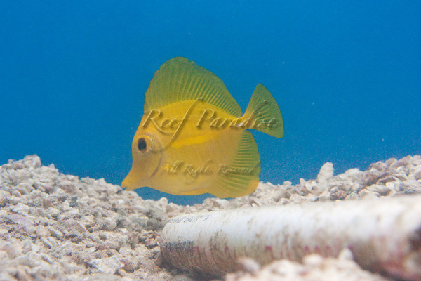 895442275 Bpy6D M - New Stuff at Reef Paradise!